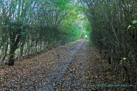 Oakfield Wood