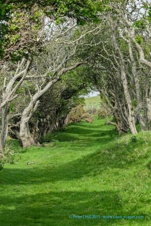 Ceredigion Coast Path nr Ffos-las