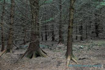 Knapdale Forest