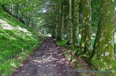 Track to Dunach