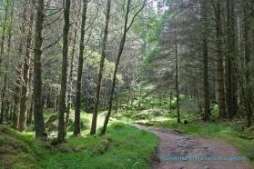 Forest Track nr Singing Sands