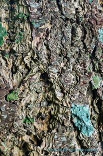 Tree Bark, Strath Carron