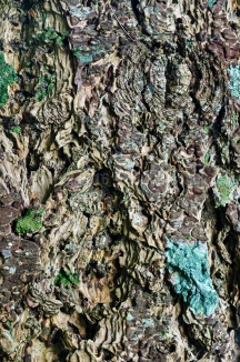 Tree Bark, Strath Carron